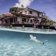 MER.Dive.Centre.shark.SHawn.Heinrichs