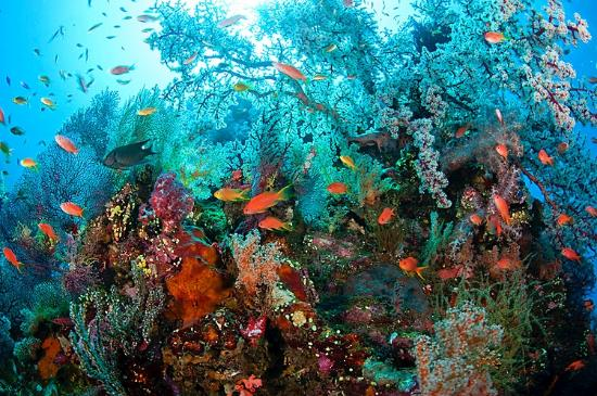 Togean Island - Archipelago Travel