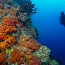 Indonesien, Indonesia, Jewels of Indonesia, Travel , Reise