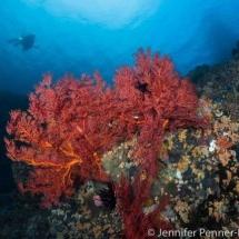 Batu_Gosok_dive_site_Bangka_Island_Indonesia