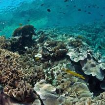 Bunaken-Timur-Snorkeling-Indonesia