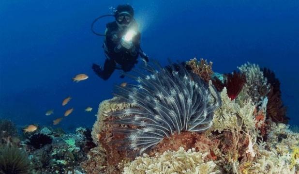 lombok diving