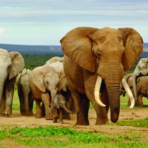 1.Addo Elephant National Park