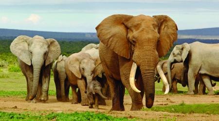 1.Addo Elephant National Park
