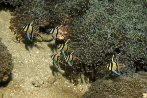 diving bunaken manado great
