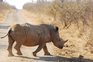Rhinos_29