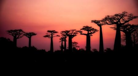 baobabs-2708289_960_720